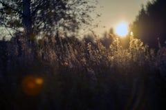 Natureza selvagem de Rússia no verão Foto de Stock
