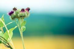 Natureza sem tocar e colorida Imagens de Stock
