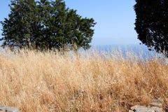 Natureza Sicília Fotografia de Stock