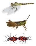 Natureza surpreendente ajustada - insetos Imagens de Stock Royalty Free