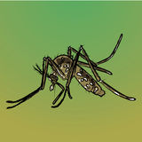 Natureza, transmissor da doença do pernas de pau dos mosquitos Foto de Stock