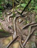 Natureza tropical em uma paisagem de Costa Rican imagens de stock