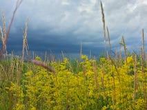 Natureza ucraniana Imagens de Stock