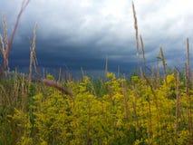 Natureza ucraniana Imagem de Stock