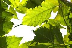 A natureza verde Imagem de Stock Royalty Free
