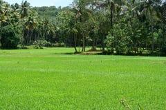 Natureza verde Imagem de Stock Royalty Free