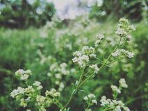 Natureza verde Foto de Stock