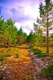Natureza verde foto de stock royalty free