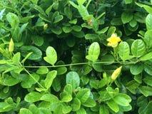 Natureza verde Imagens de Stock