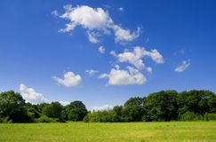 Natureza verde Fotografia de Stock
