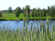 Natureza verde Imagem de Stock
