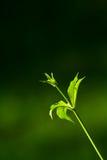 Natureza verde Imagens de Stock Royalty Free