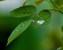 Natureza verde Buty Fotografia de Stock
