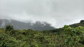 natureza verde com céu Foto de Stock