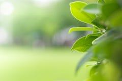 Natureza verde com espaço da cópia foto de stock