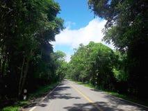 Natureza verde da estrada Fotos de Stock
