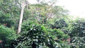 Natureza verde da floresta Imagem de Stock