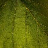 Natureza verde da folha Fotografia de Stock Royalty Free