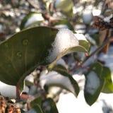 Natureza verde das folhas das gotas da neve foto de stock
