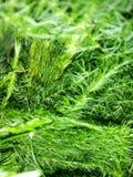 A natureza verde sae da parede do fundo Imagem de Stock Royalty Free