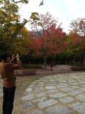 Naturfärger Arkivbild
