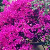 Naturfärger Royaltyfria Foton
