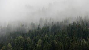 Naturfärger sörjer Forest With Pure Morning Mist royaltyfri foto