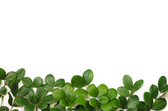 Naturfeld Lizenzfreies Stockfoto