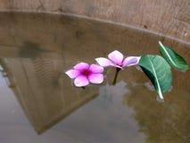naturfotografisolen blommar lerakreativitetinscets royaltyfri bild