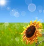 Naturfrühling bokeh Hintergrund Stockbild