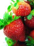 Naturfrühlingsgrün-Erdbeerreife Beere lizenzfreies stockfoto