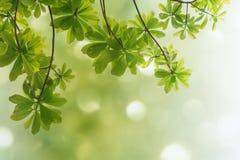 Naturfrühlingshintergrund Stockbild