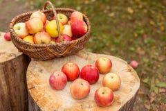 Naturfruchtkonzept Lizenzfreies Stockbild