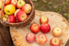 Naturfruchtkonzept Lizenzfreie Stockfotos