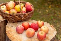Naturfruchtkonzept Stockbilder