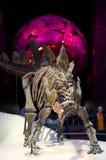 Naturgeschichte-Museum London Lizenzfreies Stockfoto