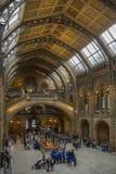Naturgeschichtliches Museum - London - England Stockfoto