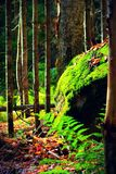 Naturgräsplan Royaltyfria Bilder