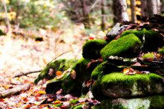 Naturgräsplan Arkivfoto