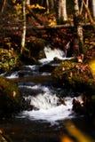 Naturgräsplan Royaltyfri Foto