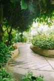 Naturgräsplan går bana Trädgårds- gångbana arkivfoton