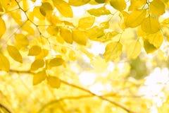 Naturgräsplan och gula blad i sommar med vit bakgrund royaltyfri fotografi