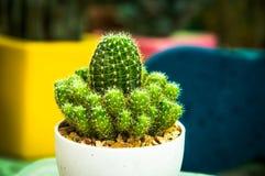 naturgräsplanbakgrunden, härlig kaktus Royaltyfria Foton