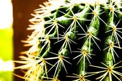 naturgräsplanbakgrunden, kaktus Royaltyfri Fotografi