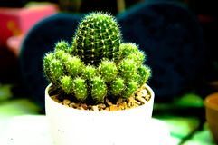 naturgräsplanbakgrunden, kaktusnärbild Arkivfoto