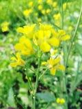 Naturgräsplantapet royaltyfria foton