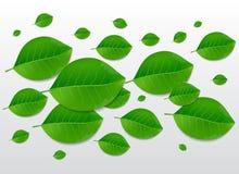 Naturgrün lässt Hintergrund Lizenzfreies Stockfoto