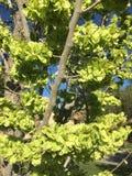 Naturgrün lizenzfreie stockfotografie