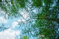 Naturgrünblätter Stockbild