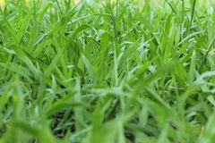 Naturgrashintergrund Stockfotos
